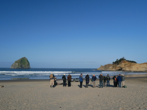 Haystack Rock and Cape Kiwanda are both popular with the birds